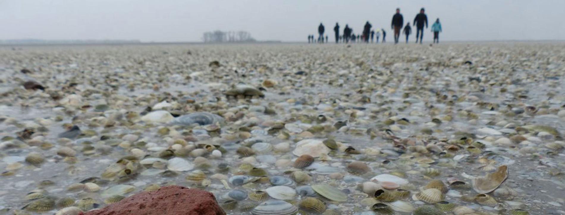 Stichting WaterHeritage